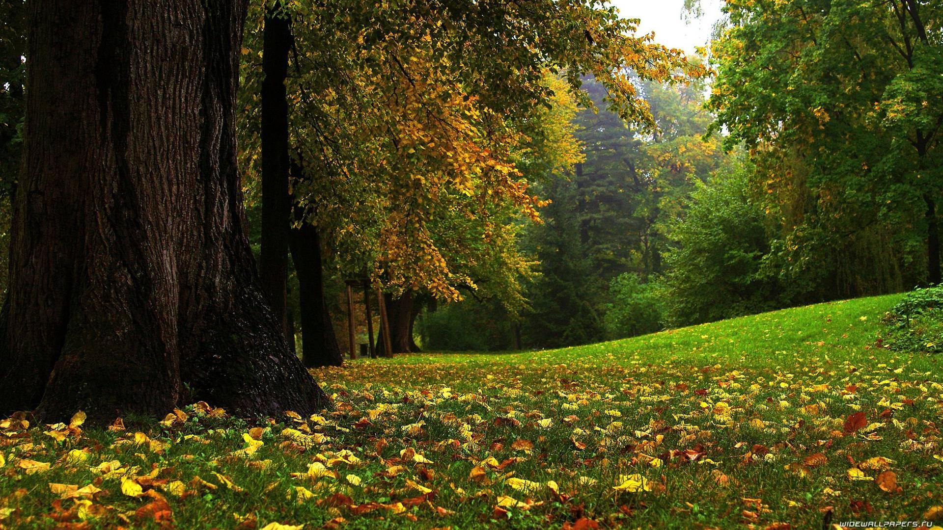 Autumn Backgrounds Desktop 1920x1080