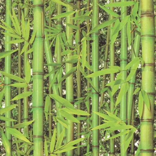 Bamboo Wallpaper Tropical Wallpapersafari
