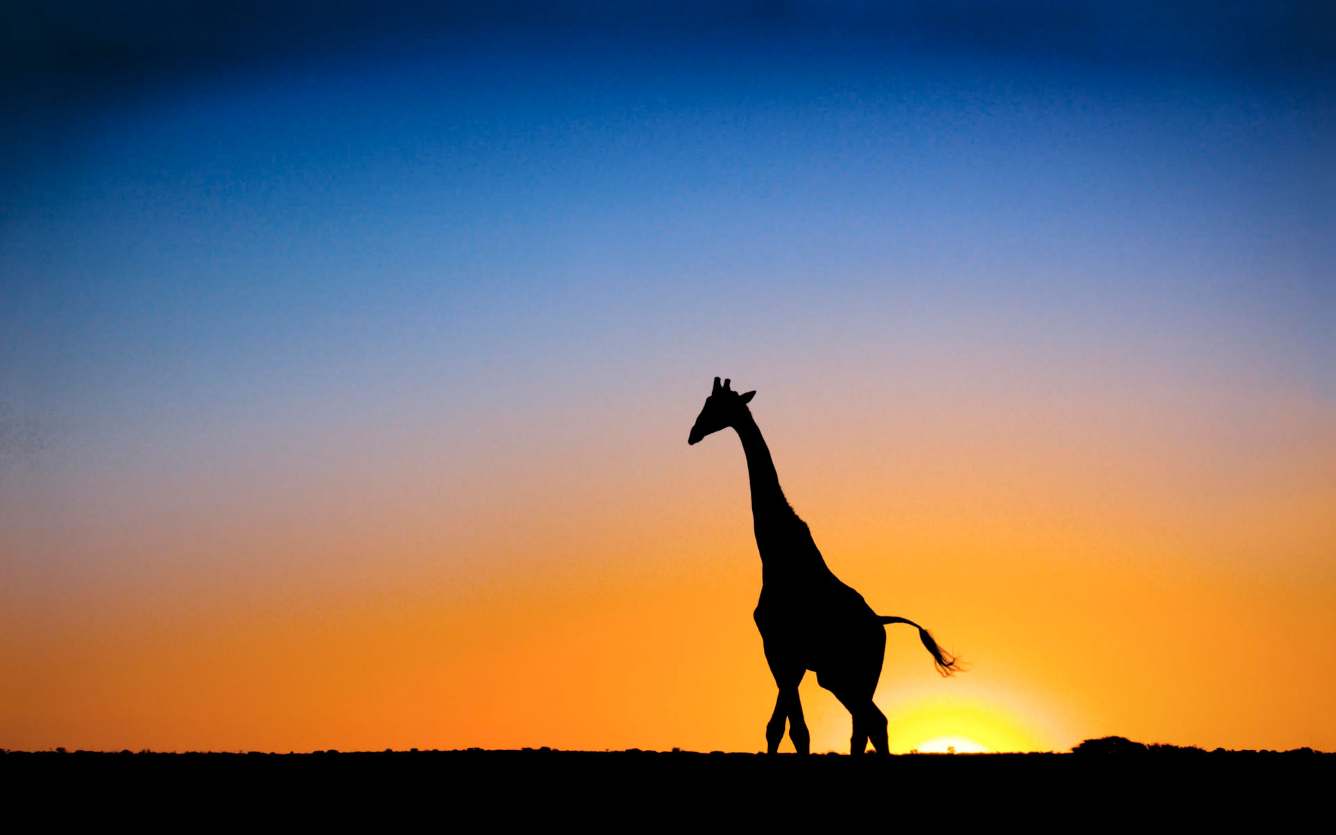 Sunset Giraffe Botswana Wallpapers HD Wallpapers 1920x1200