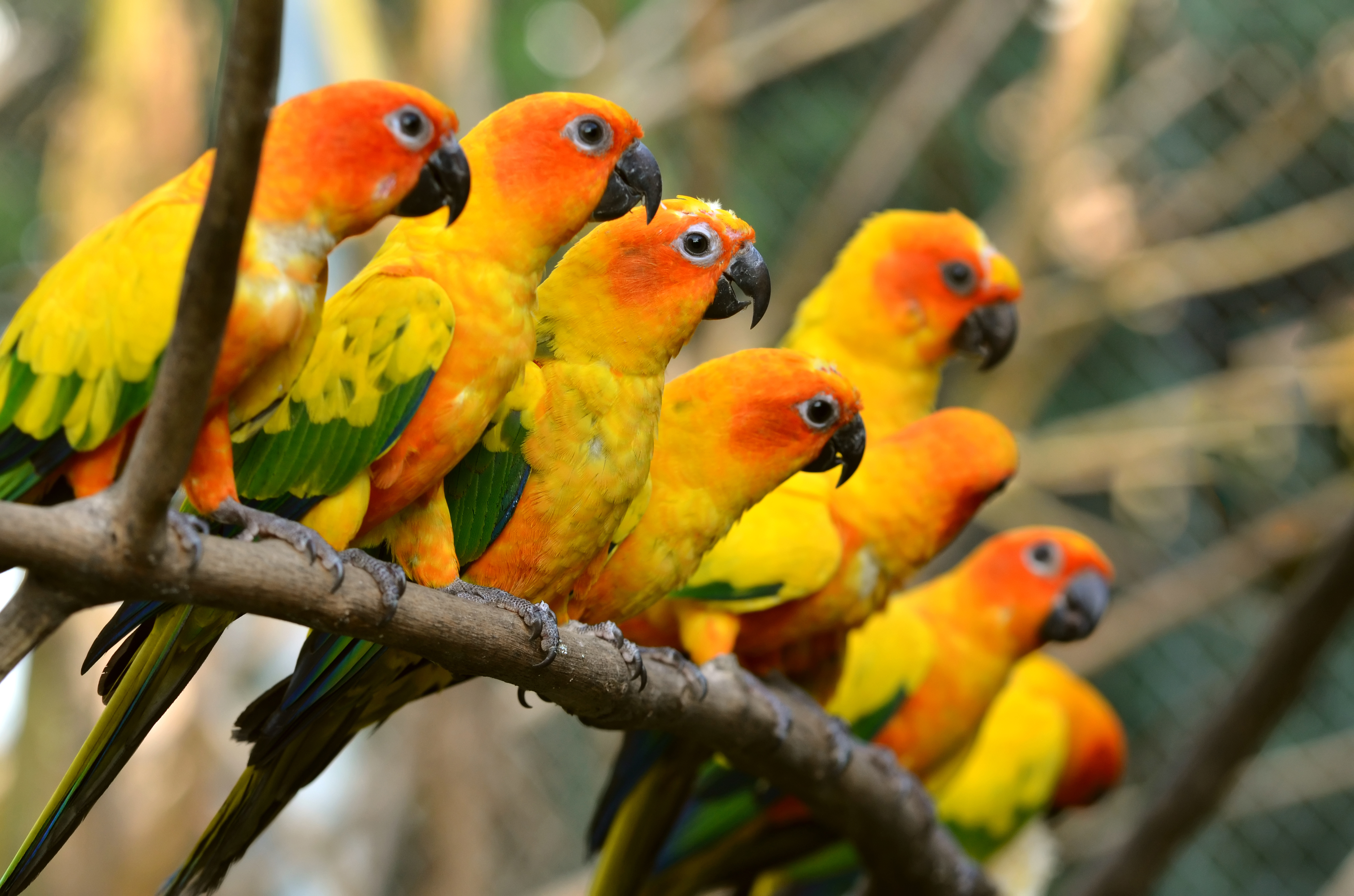 138 Parrot HD Wallpapers Background Images 4928x3264