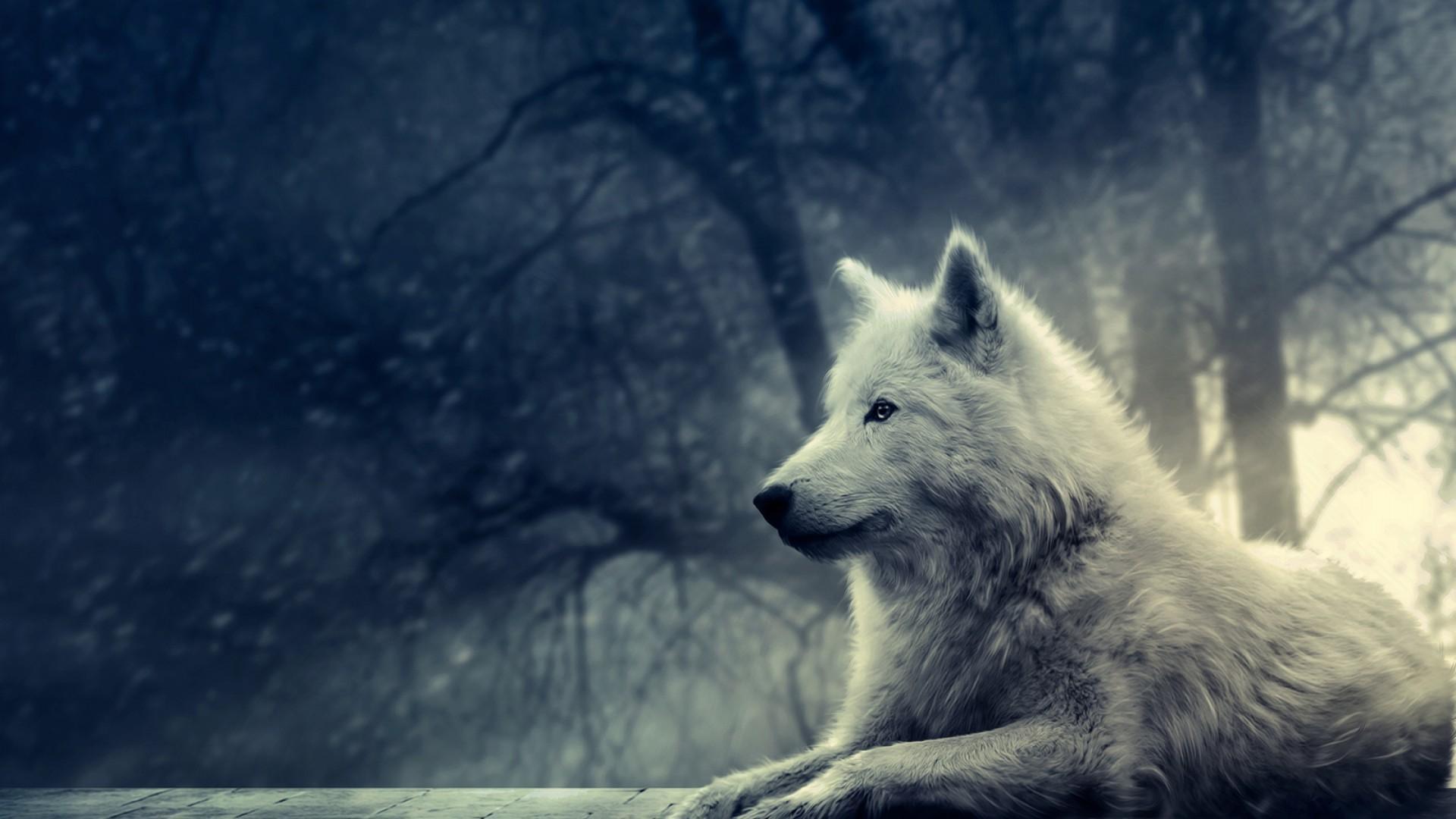 49 Wolves Wallpapers For Desktop On Wallpapersafari