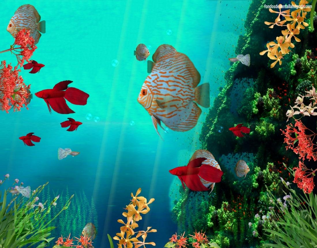 Free Live Moving Fish Wallpaper - WallpaperSafari