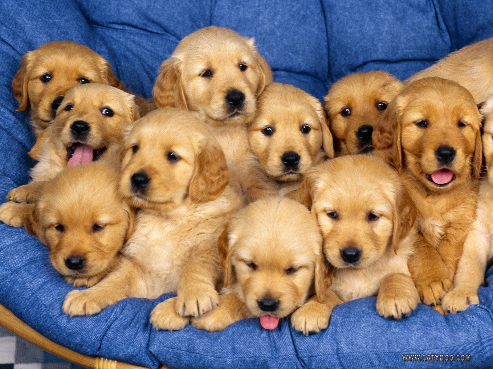 Funny Animals Wallpapers Very Cute Puppies 1600x1200