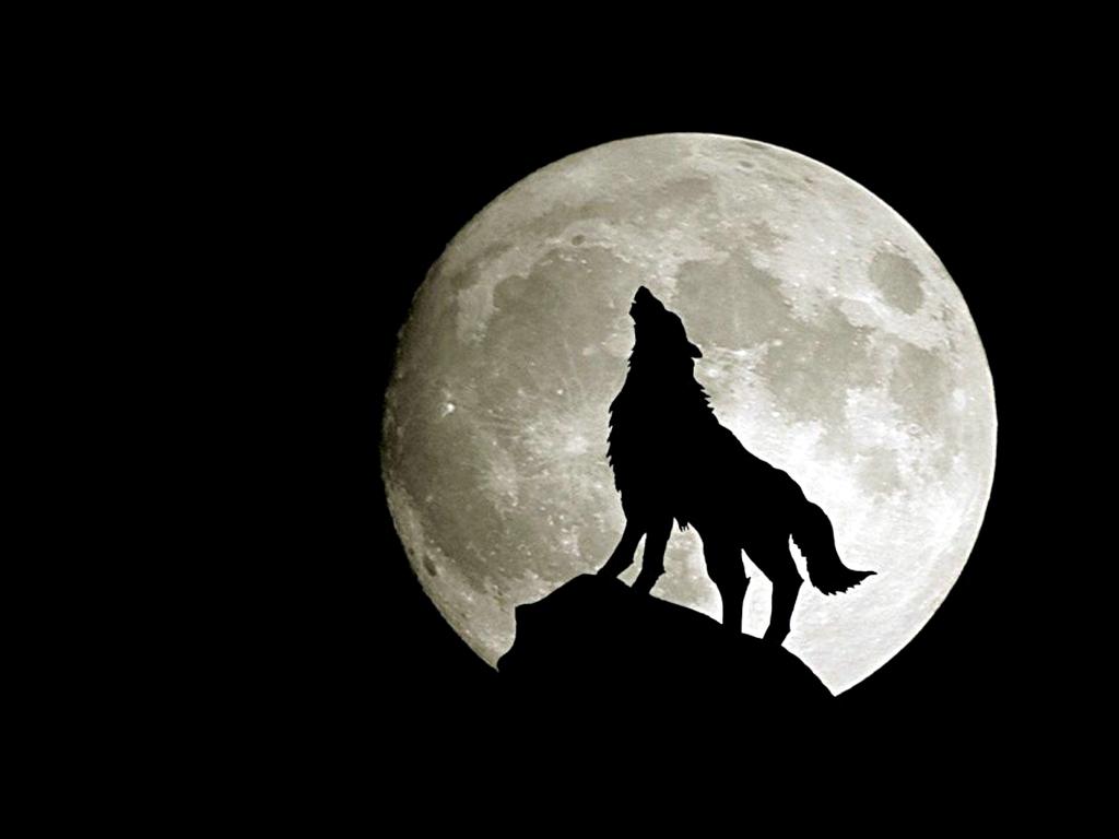 Howling Wolf Wallpaper Desktop 1024x768