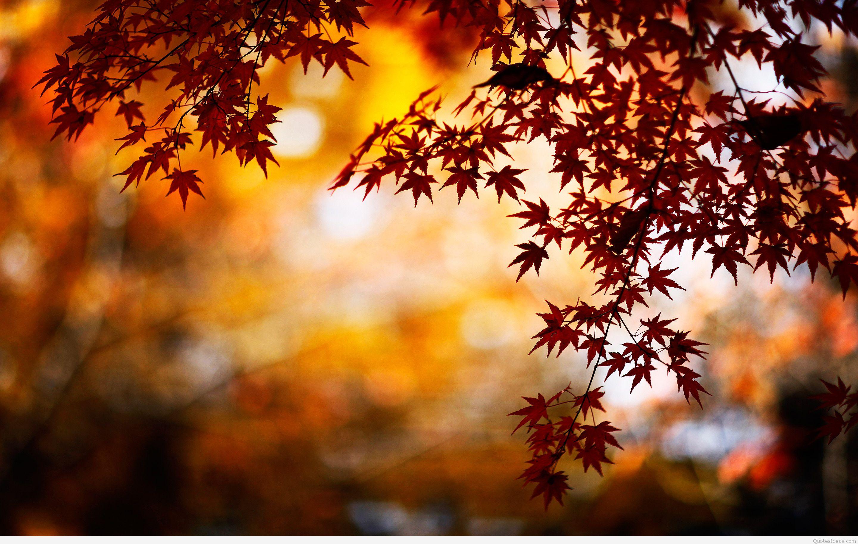 Pics Photos   Autumn Leaves Hd Wallpaper 2880x1827