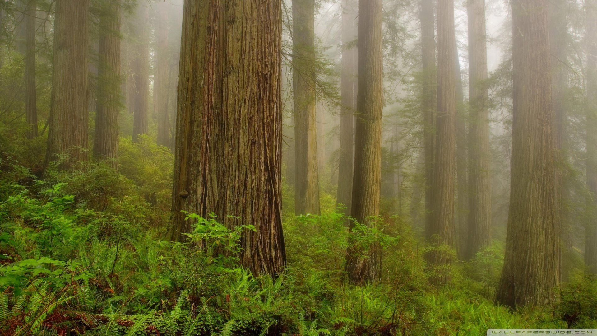 Redwood National Park 4K HD Desktop Wallpaper for 4K Ultra HD 1920x1080
