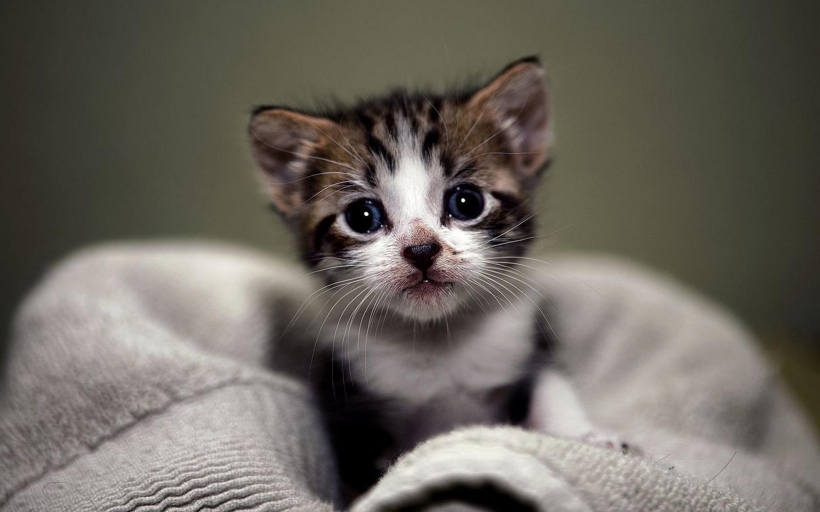 Cute Kitten Wallpaper The Desktop Wallpaper 1600x1000