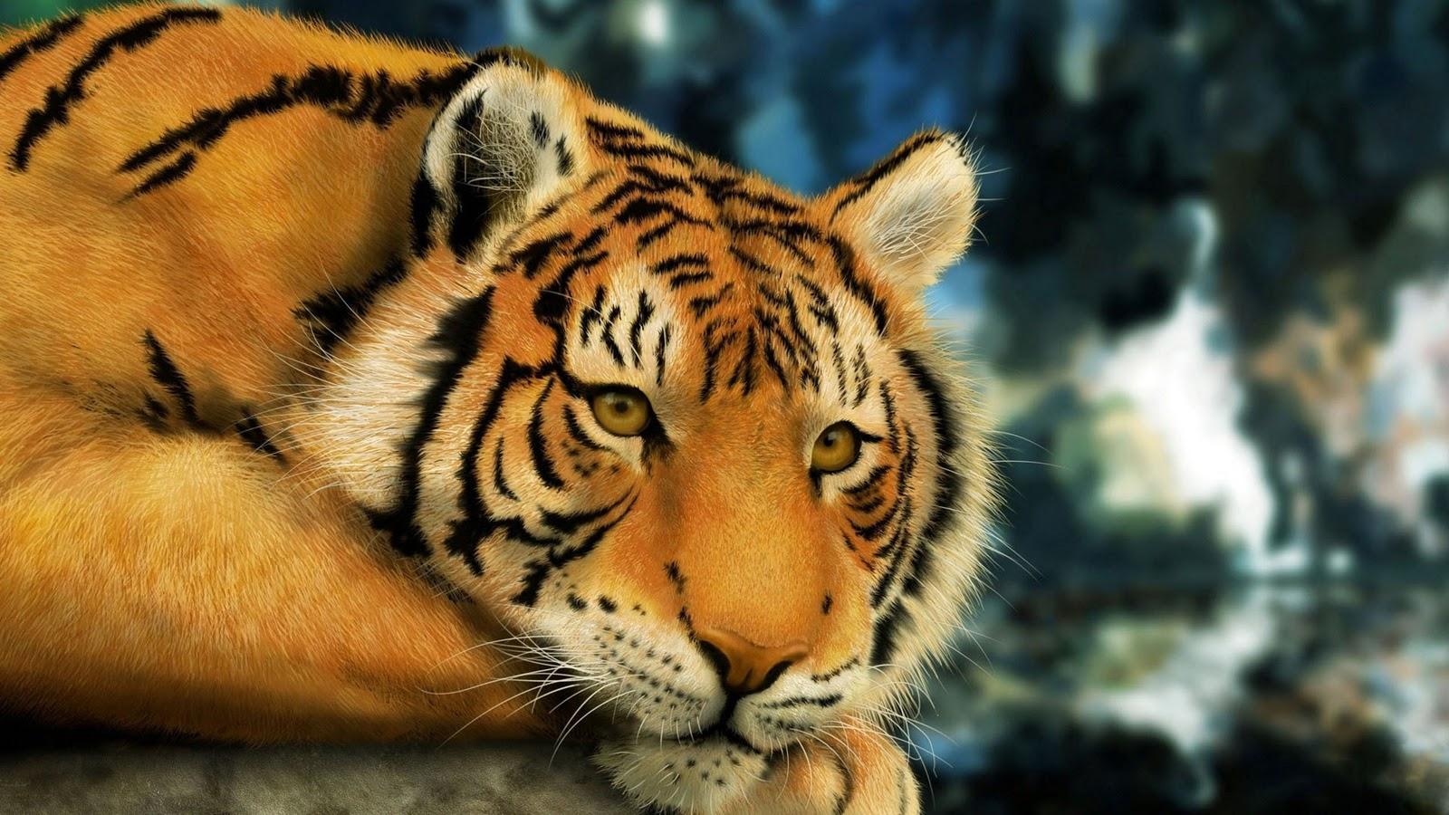 tiger 1920 x 1080 hd digital art tiger wallpaper 1080p 1600x900