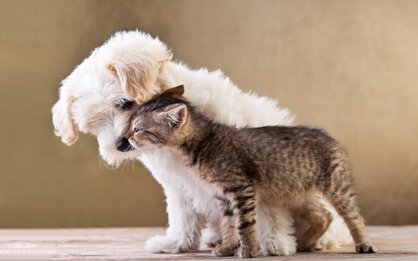 Top Puppies And Kittens Cuddling Wallpapers 1600x1000