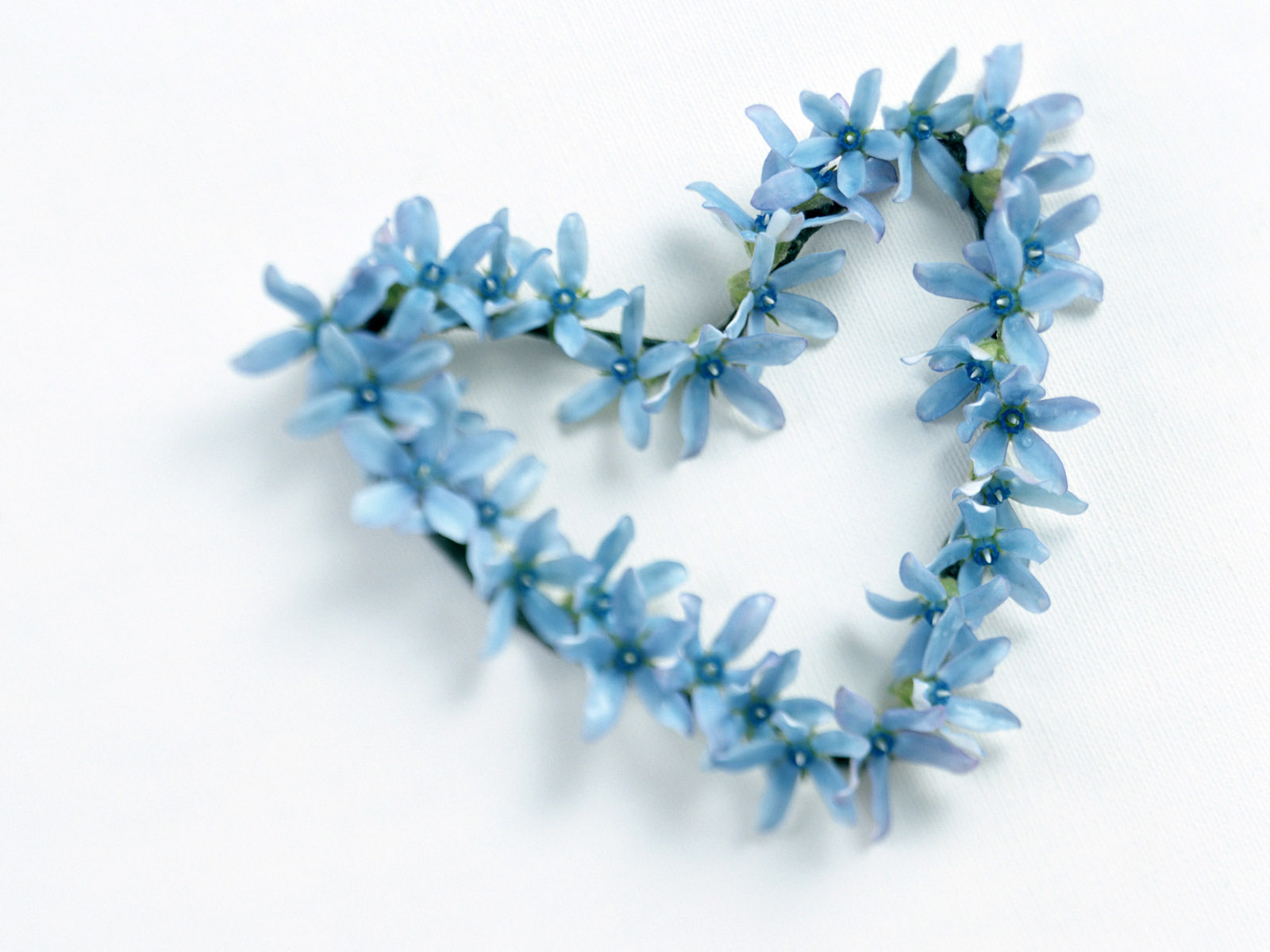 1600x1200px blue flower wallpaper wallpapersafari