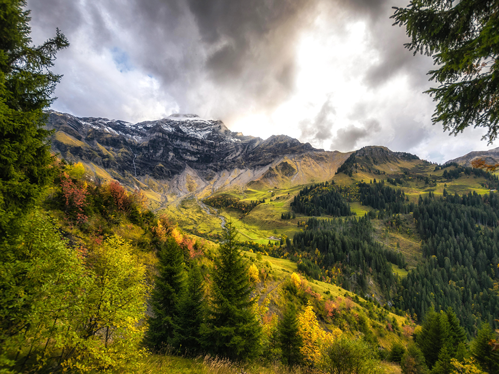 Images Switzerland Interlaken Oberhasli Nature Spruce 1600x1200 1600x1200
