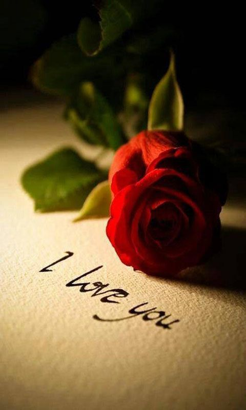 cute I Love You Wallpaper For Mobile : cute Love Wallpapers for Mobile - WallpaperSafari