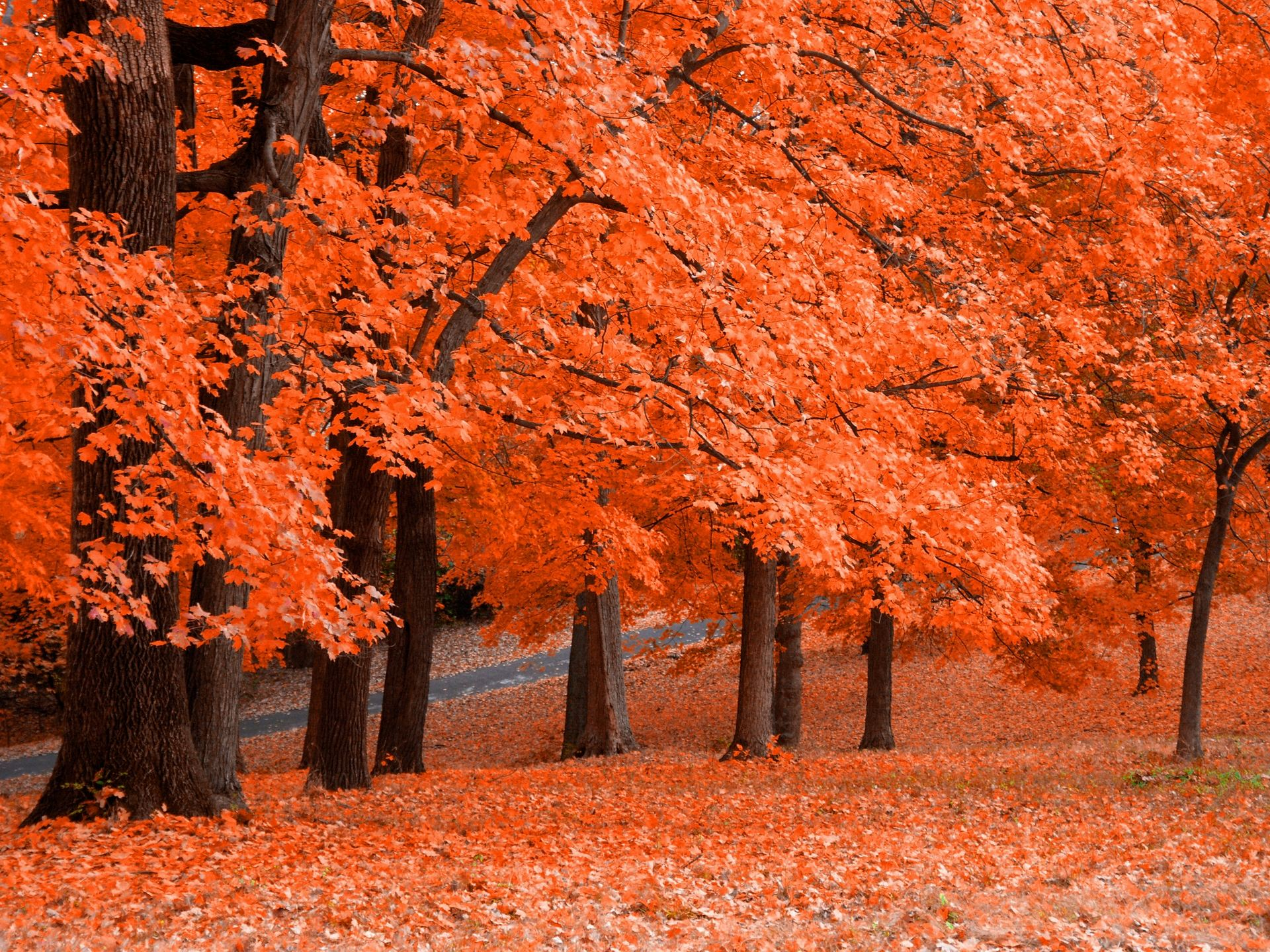 Free Download Google Chrome Themes Autumn Trees Theme 1920x1440 For Your Desktop Mobile Tablet Explore 73 Fall Themed Backgrounds Fall Themed Wallpaper Fall Themed Backgrounds Fall Themed Wallpaper Desktop