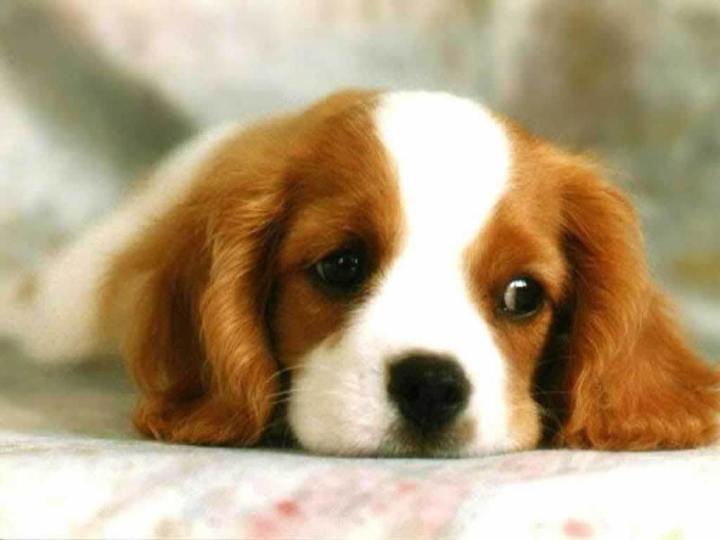 Cute Puppies Wallpapers 10001 Hd Wallpapers in Animals   Imagescicom 1024x768