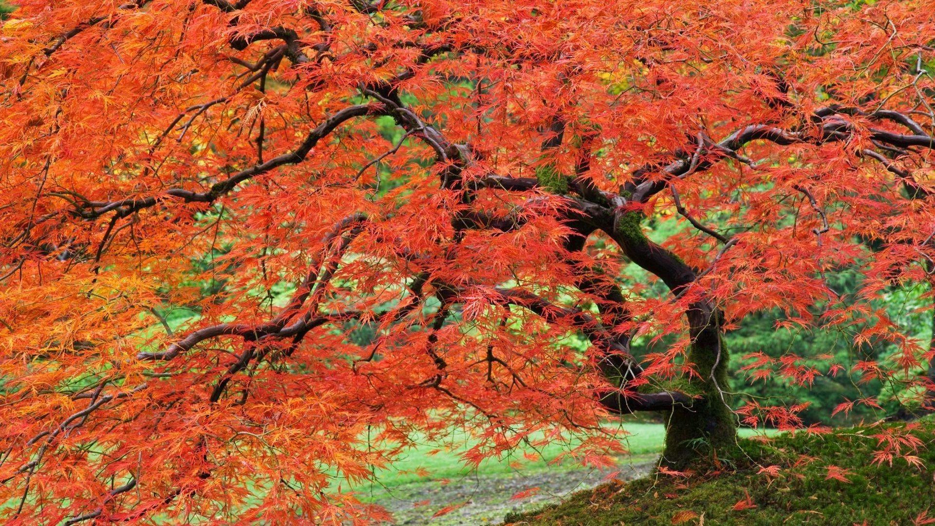 Portland Japanese Garden wallpaper 8284 1920x1080