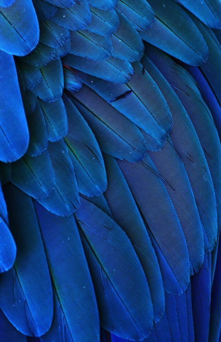 Macro photograph of the feathers of a Blue and Yellow Macaw 736x1137
