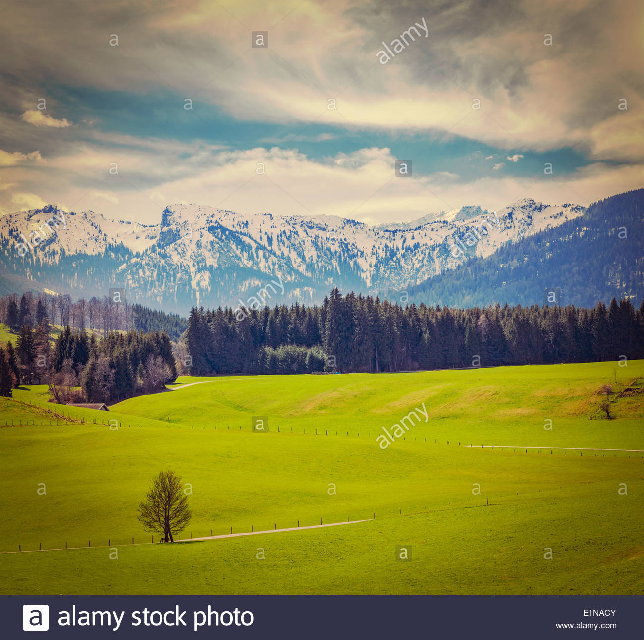 German idyllic pastoral countryside in spring with Alps in 1300x1292