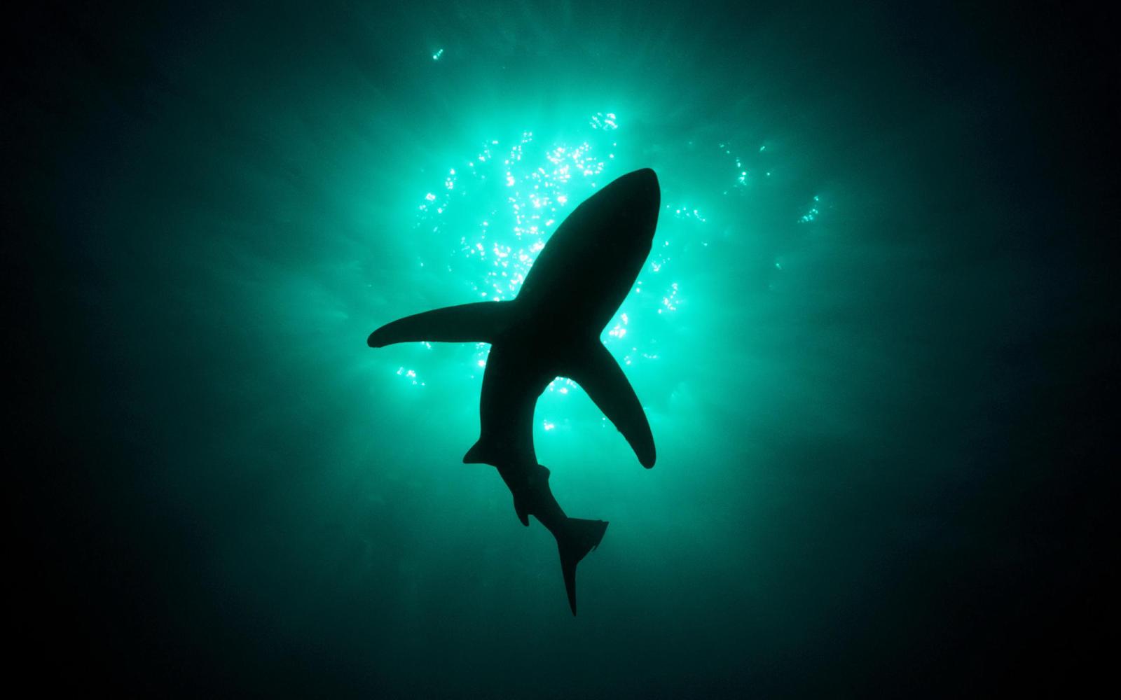 great white shark wallpaper deep sea desktop wallpaper 1600x1000