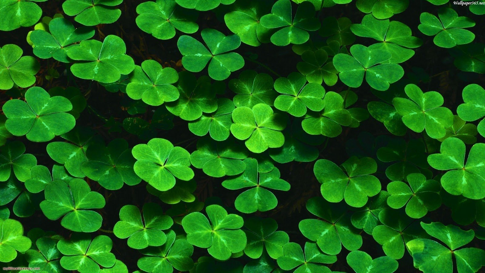 clover pictures Wallpaper Wallpapers Desktop Wallpaper HD 1600x900