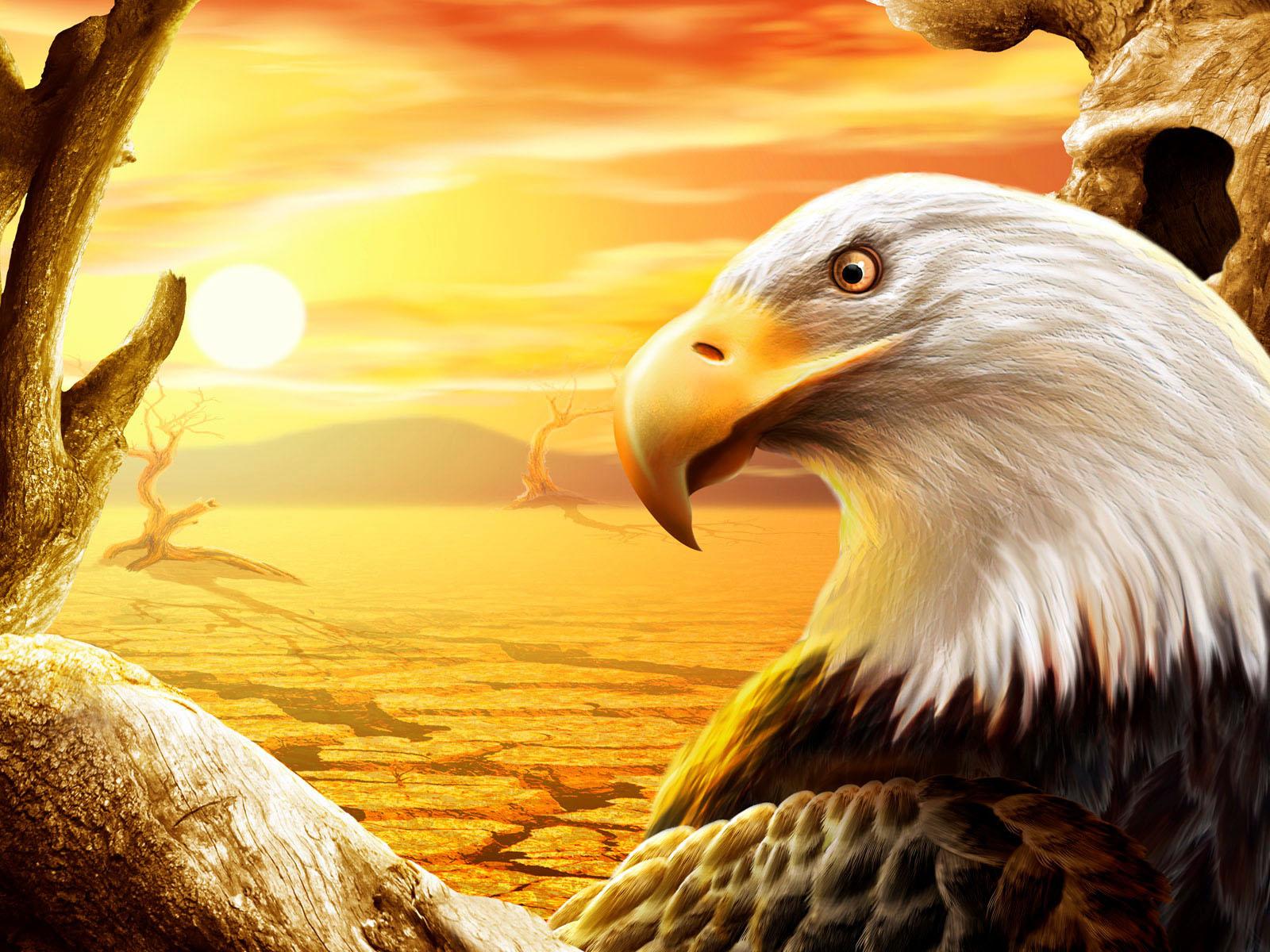 Eagle Wallpapers Desktop Wallpapers 1600x1200