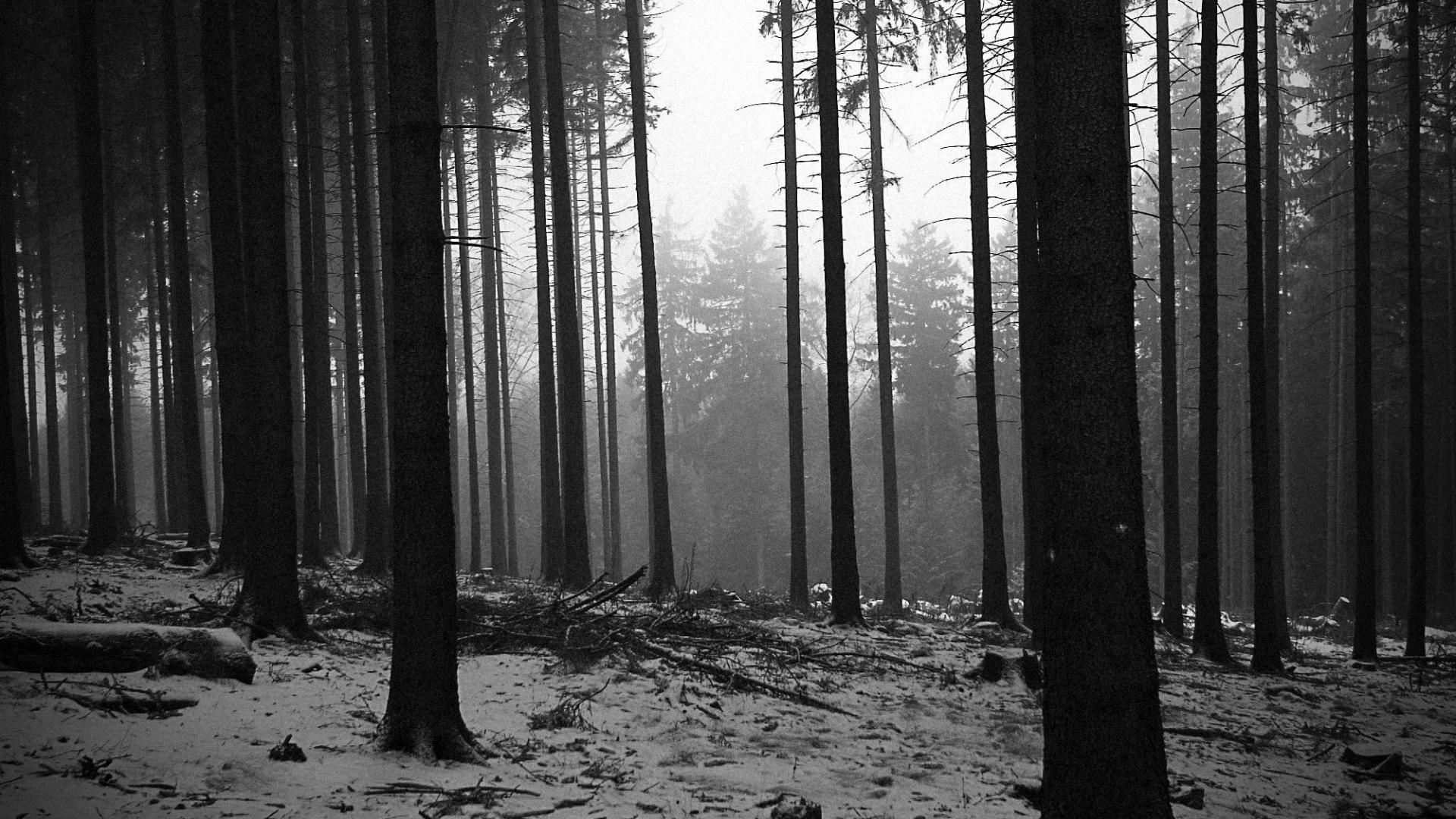 Black and white landscapes trees forest monochrome wallpaper 39675 1920x1080