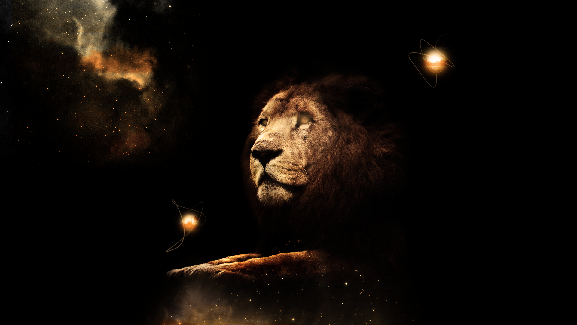 Lion Wallpaper HD by Tooyp 1920x1080