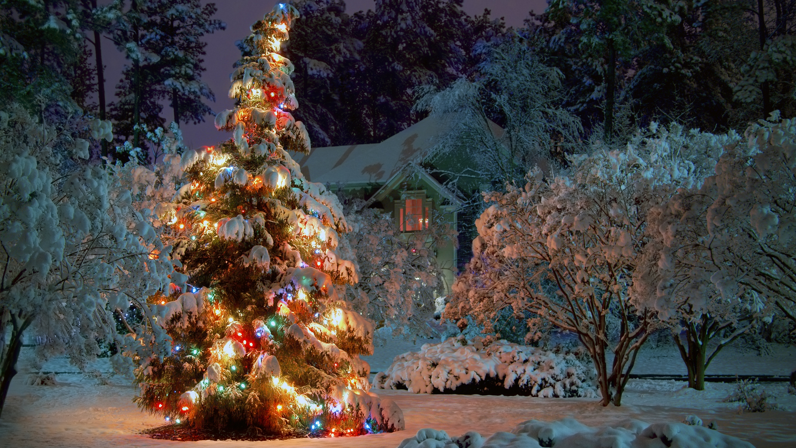 2560x1440 Outdoor Christmas tree desktop PC and Mac wallpaper 2560x1440