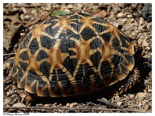 Animals Zoo Park Tortoise Animals   Tortoise Wallpapers   Pictures 500x375