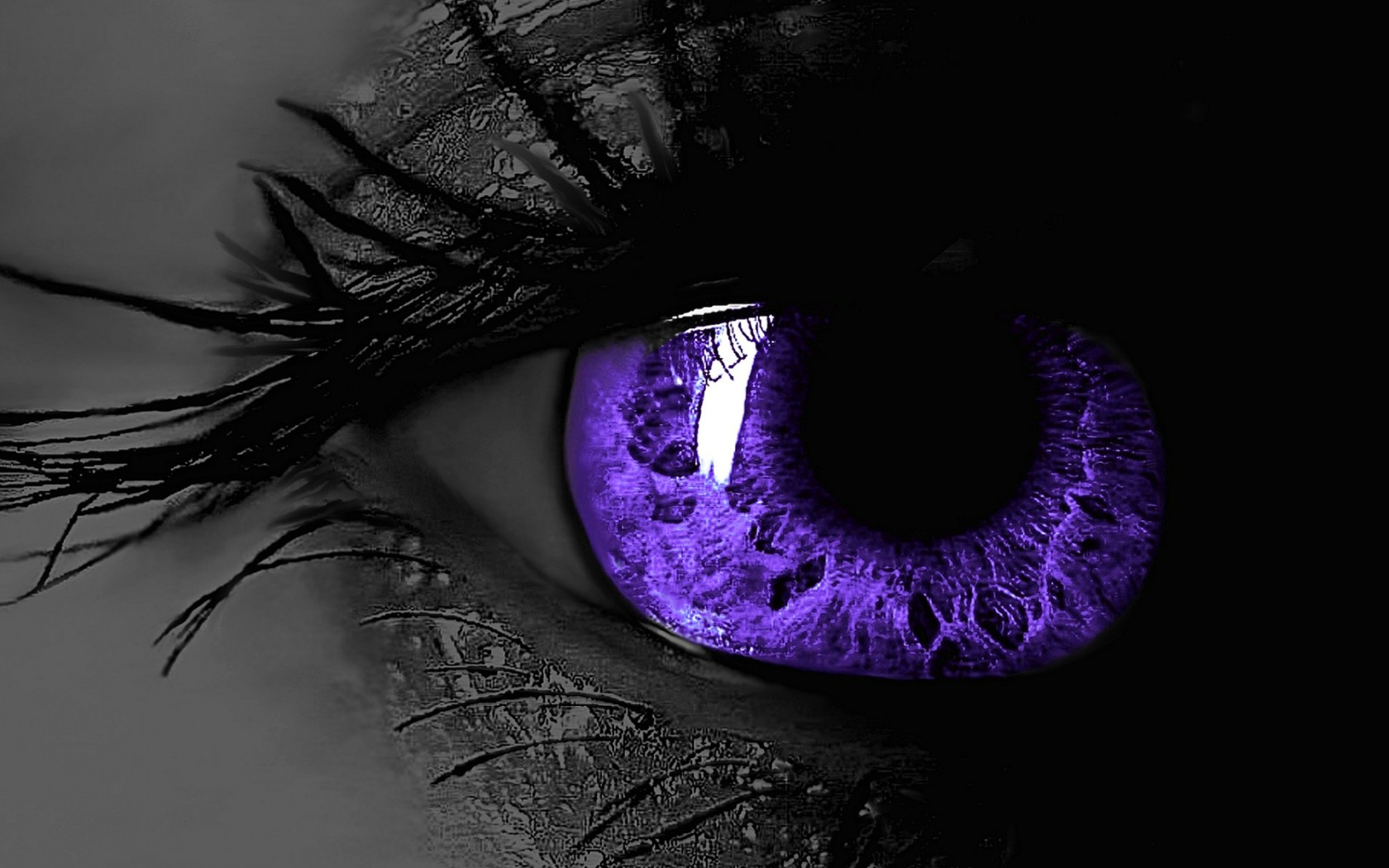 Free Download Black And Purple Wallpaper Hd 2381 Hd Wallpapers