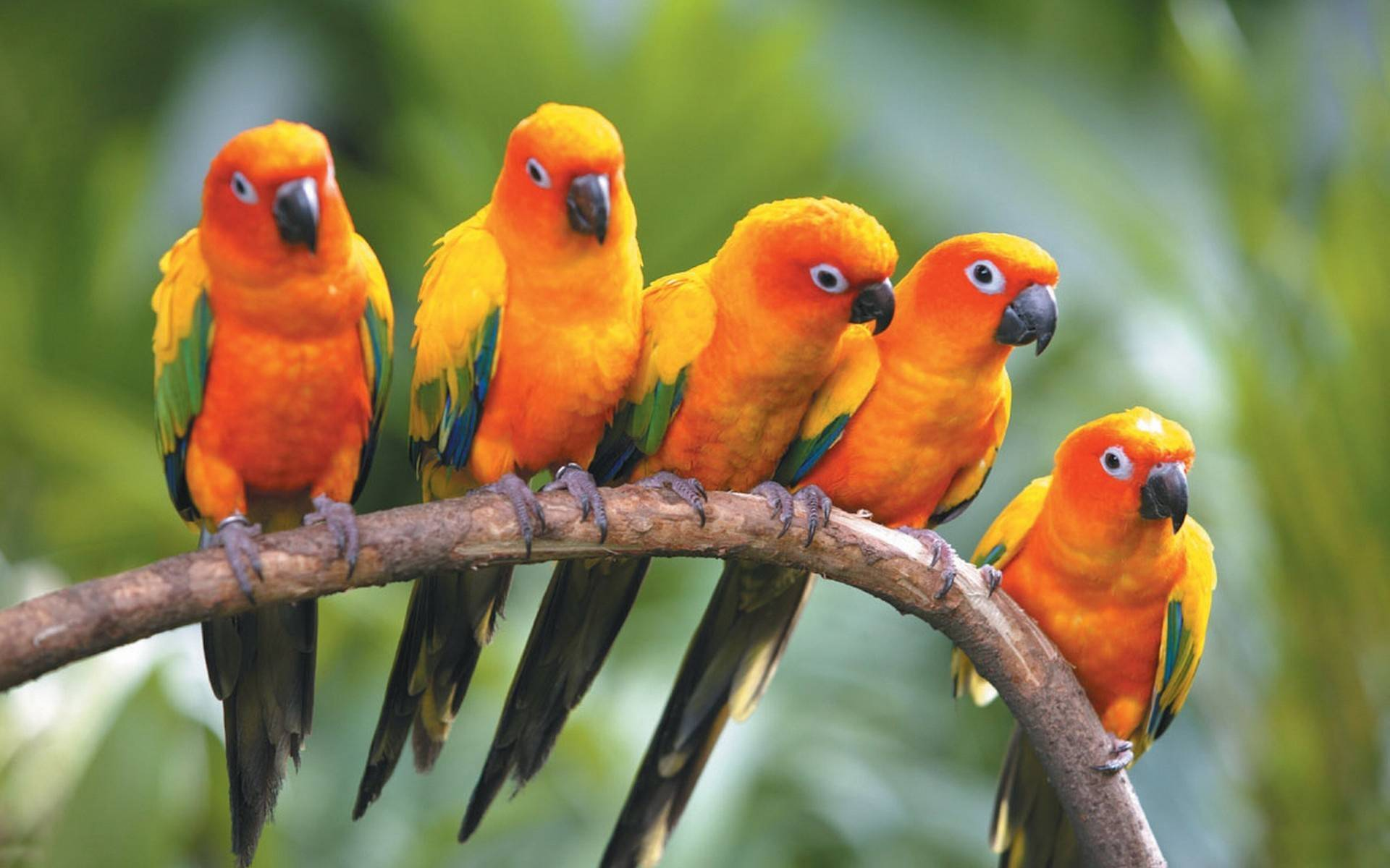 2016 Parrot HD Wallpapers Wallpapers and Pictures download on 1920x1200