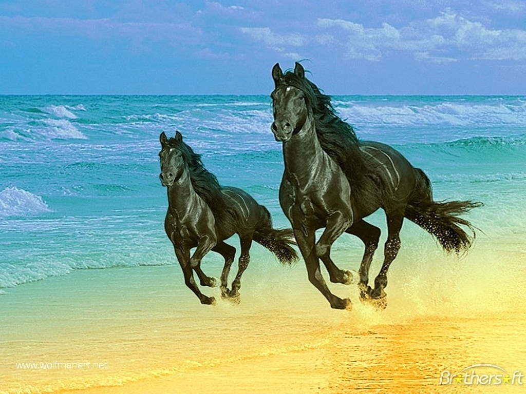 Wallpaper Time Machine August 9 Two Horse on Beach Wallpaper Download 1024x768