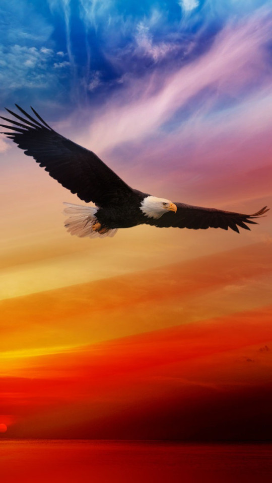 American Bald Eagle For Independence Day Wallpaper   iPhone 540x960