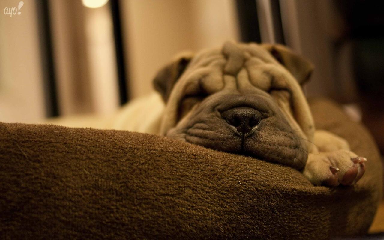 Cute Dog Mac Wallpaper Download Mac Wallpapers Download 1280x800