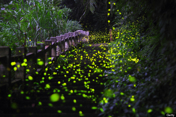 Lightning Bugs Wallpaper
