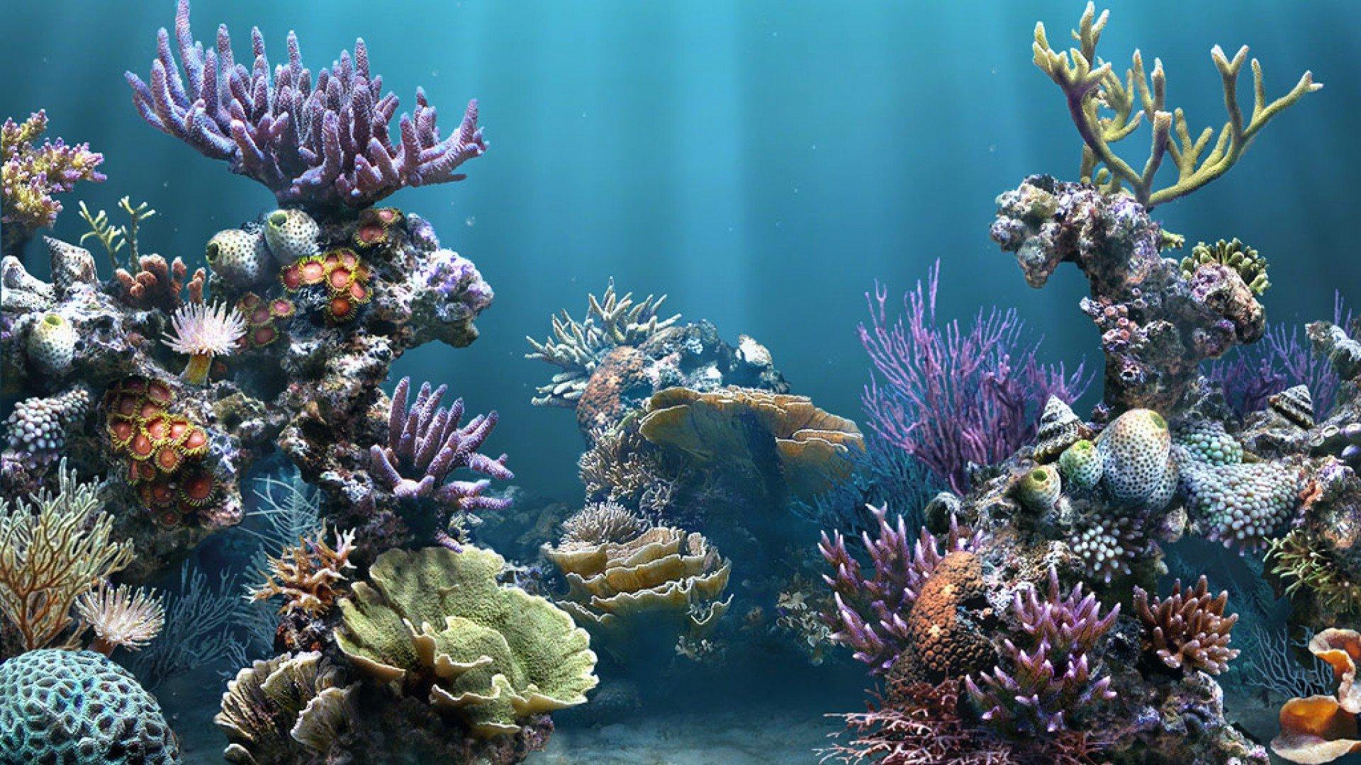 47] Aquarium HD 1080p Wallpaper on WallpaperSafari 1920x1080