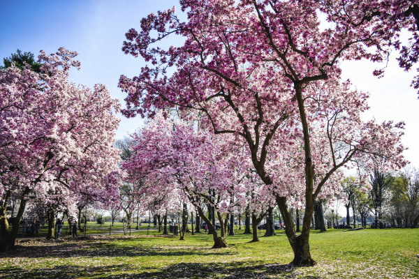 Happy First day of spring Quotes And Wallpaper Best Cool 600x400