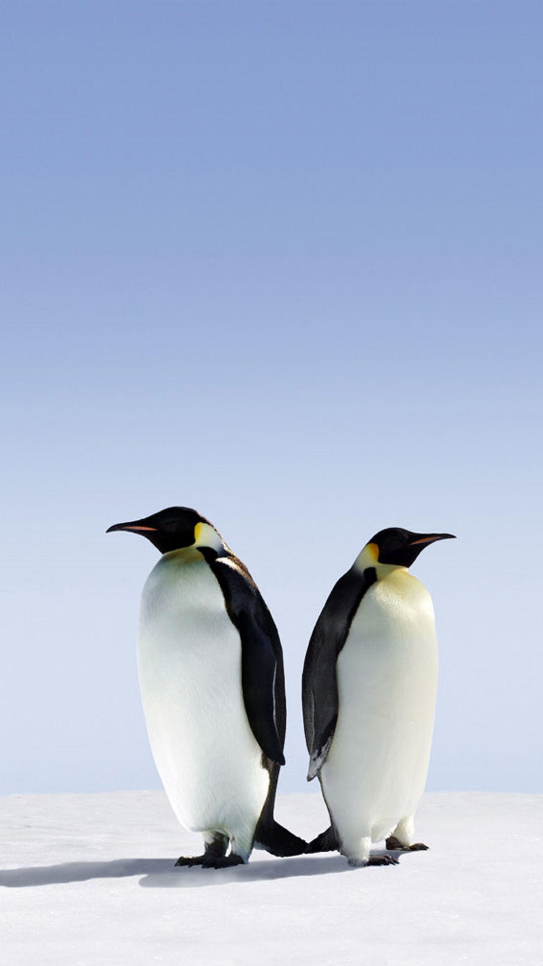 Cute Penguin iPhone Wallpapers   Top Cute Penguin iPhone 1080x1920