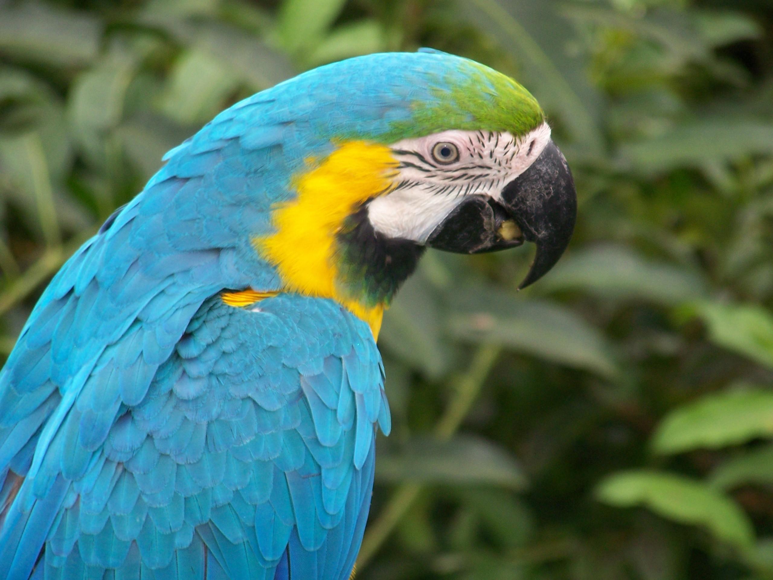 Download Wallpaper HD Parrot Bird For DesktopBeautiful Bird 2560x1920
