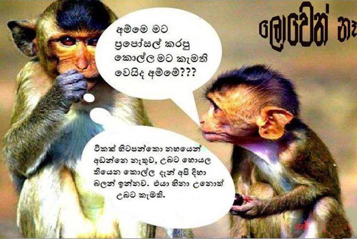 Funniest Emails Patti Gonaaaa Very Funny Sinhala Joke   RainpowCom 720x483