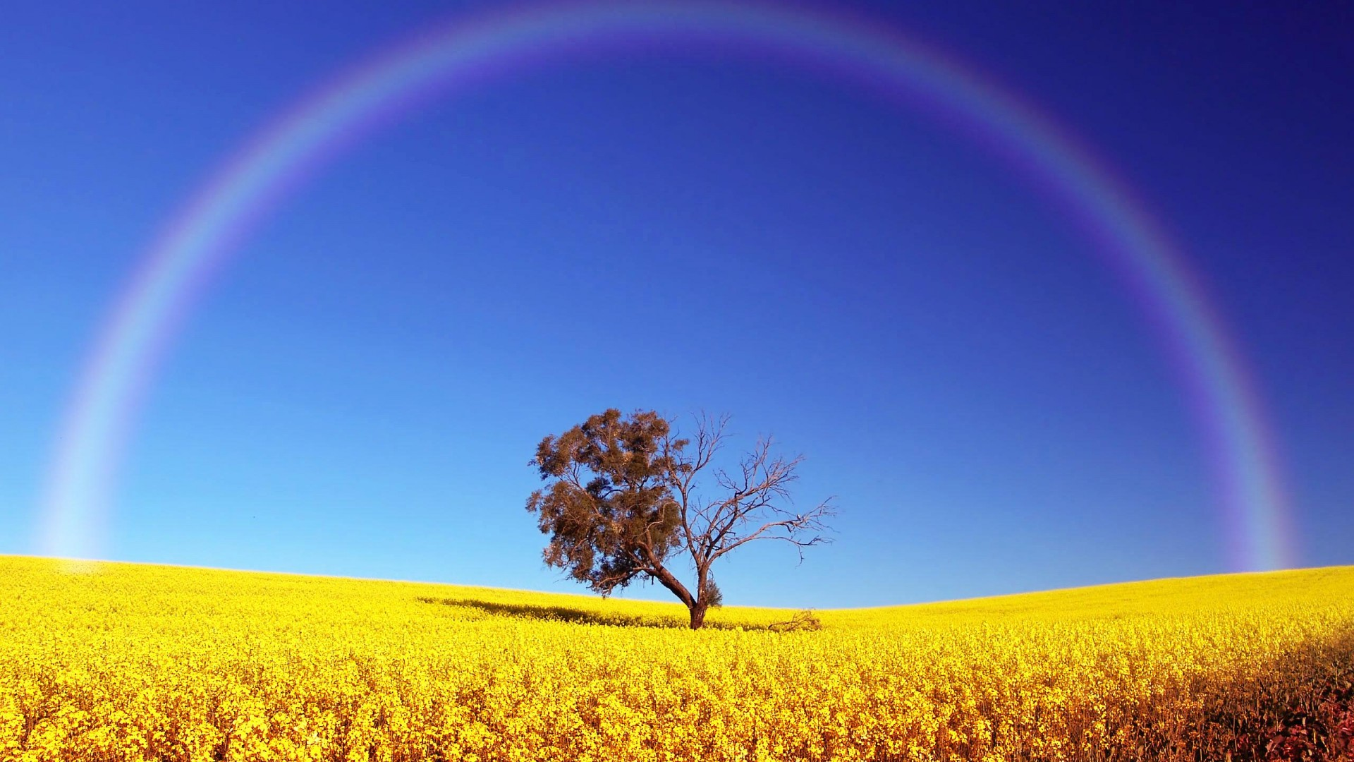 Hd wallpaper rainbow - Rainbow Hd Wallpapers Pictures Images Backgrounds Photos