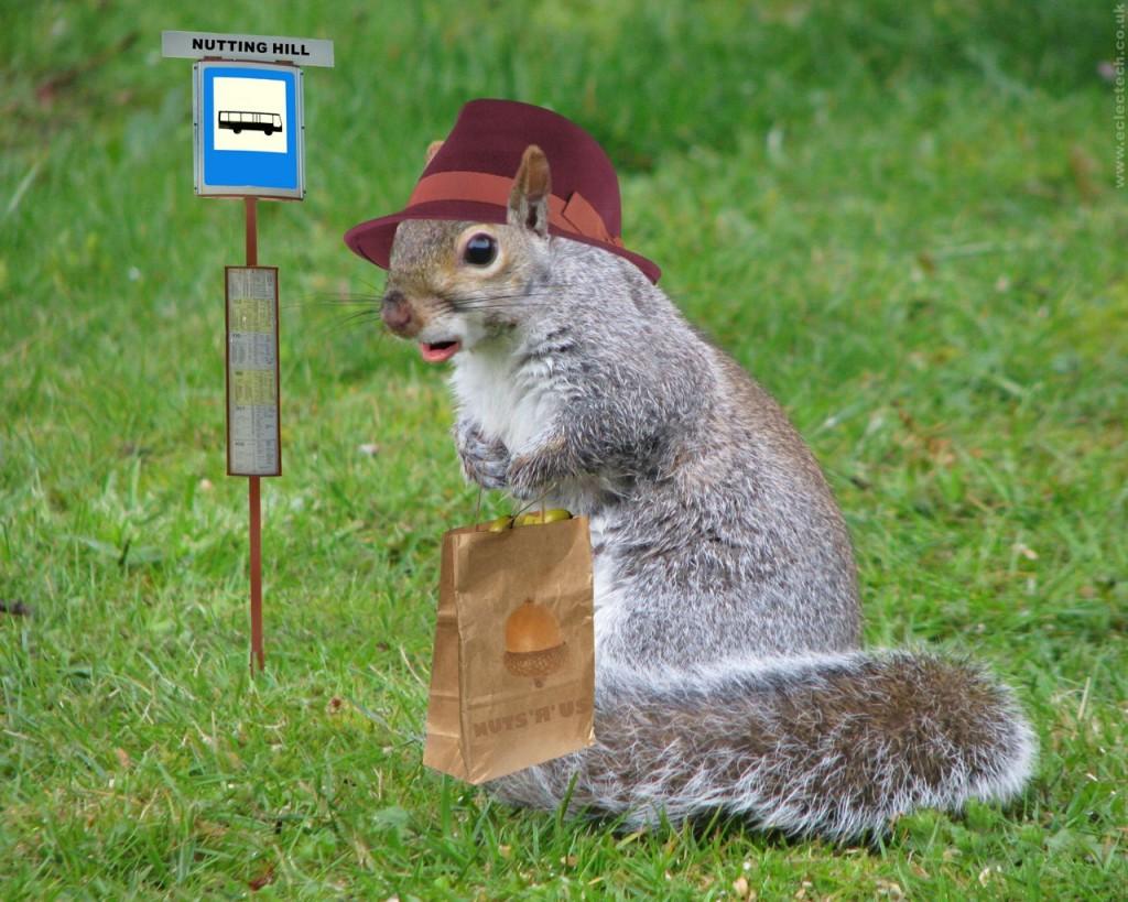 Baby Squirrel Wallpape...