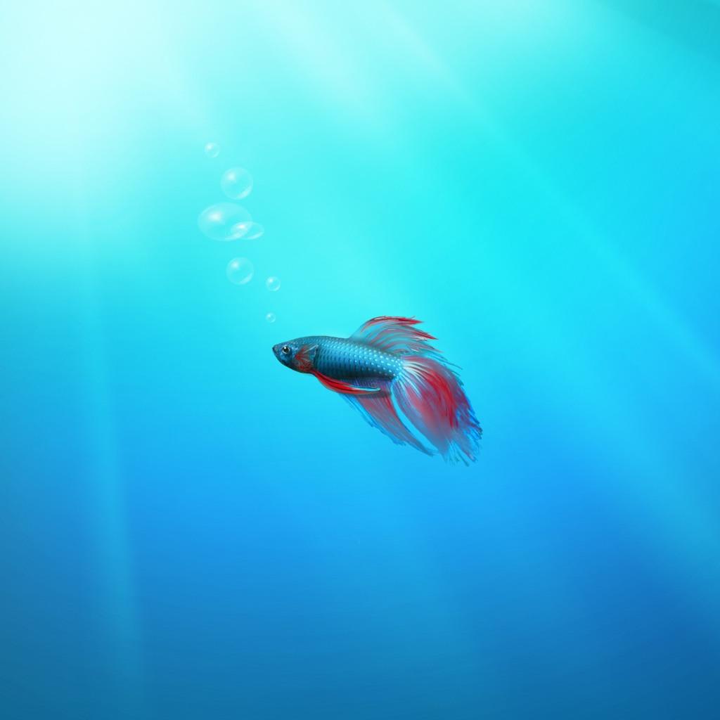 stylistic beta fish ipad wallpaper 1024x1024
