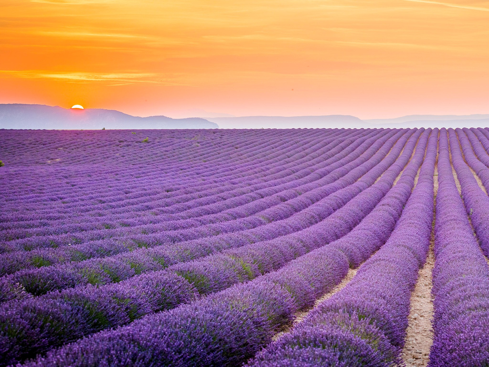 Lavender field Provence France HD Wallpaper Background Image 2048x1536