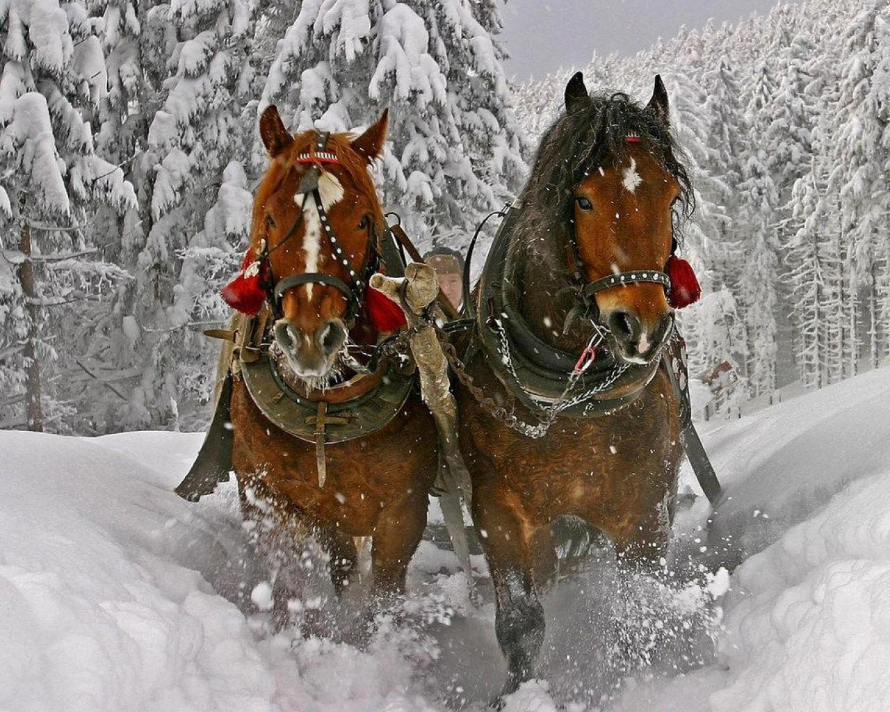 christmas sleigh horses 1920x1080 wallpaper - photo #2