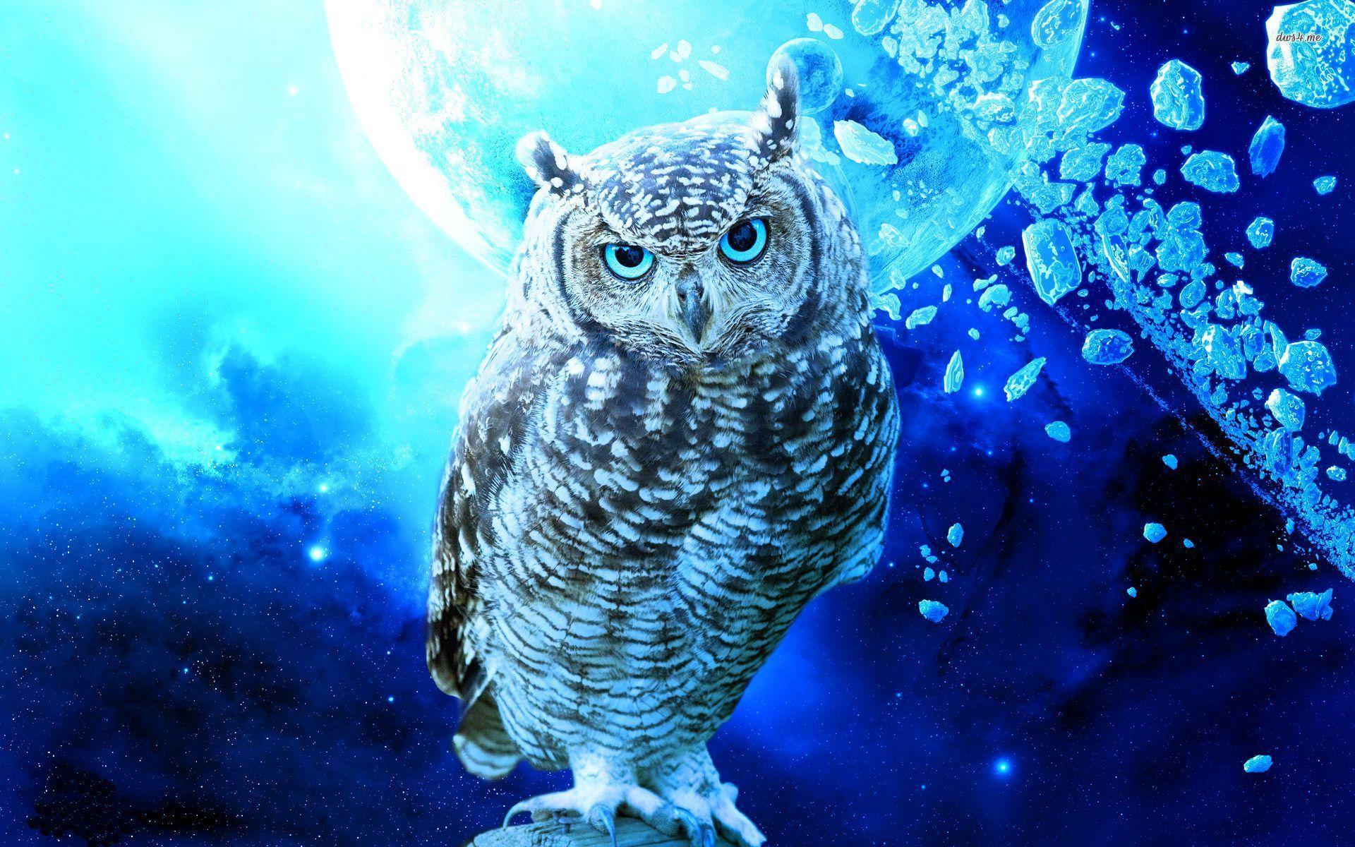 Cool Owl Wallpapers - WallpaperSafari  Cool Owl Wallpa...