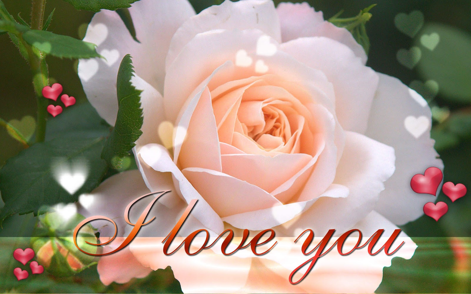 New Latest i love you wallpapers on this valentines day 2016 1600x1001