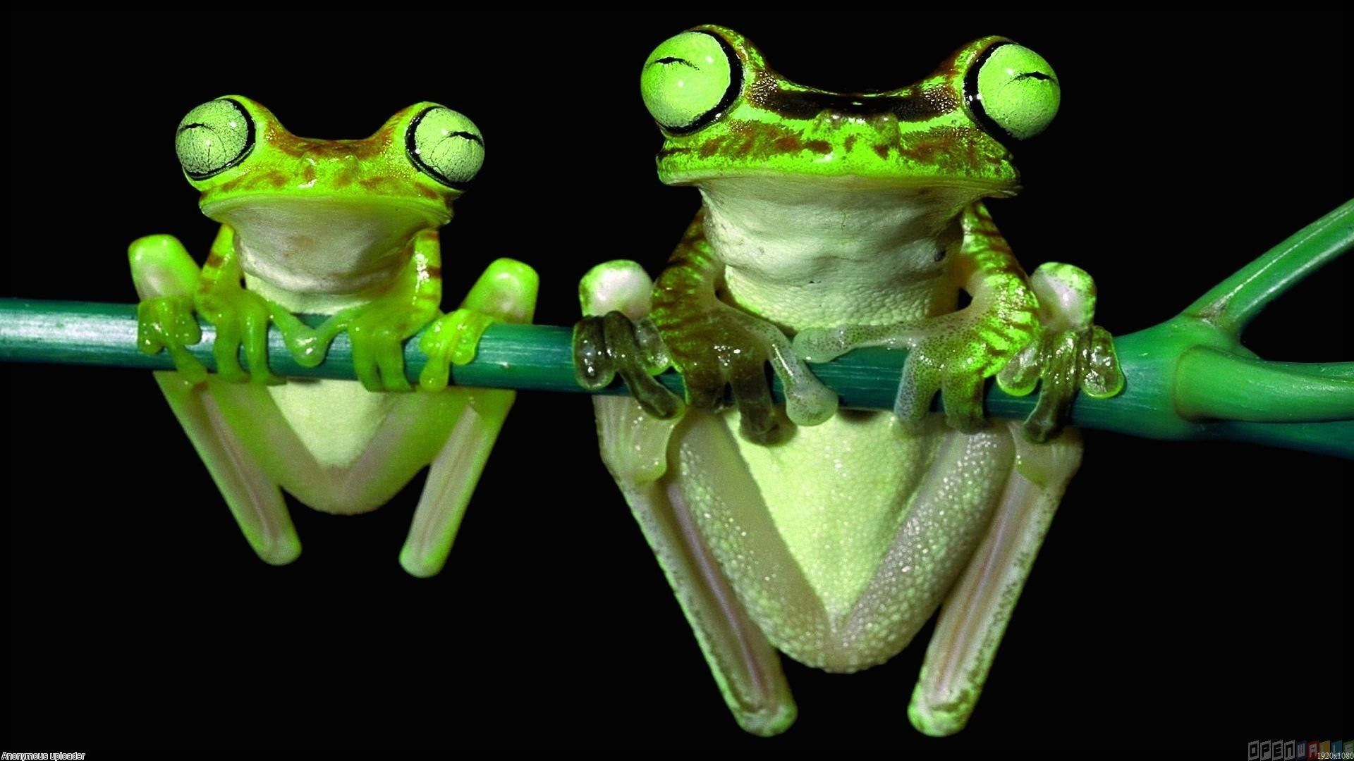 cute frog background hd full size wallpapers animals picture frog 1920x1080