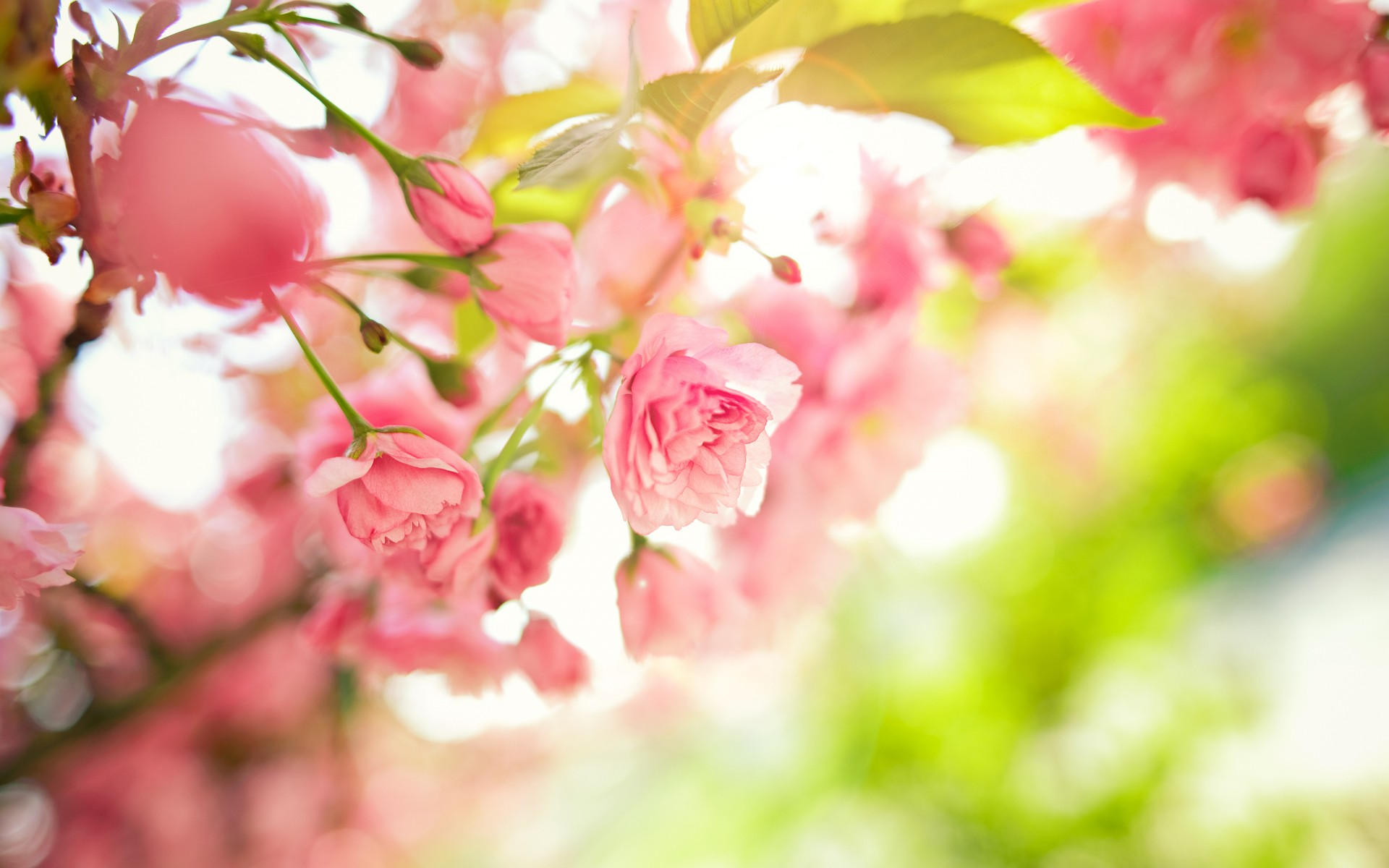 Spring flowers wallpapers HD 1920x1200