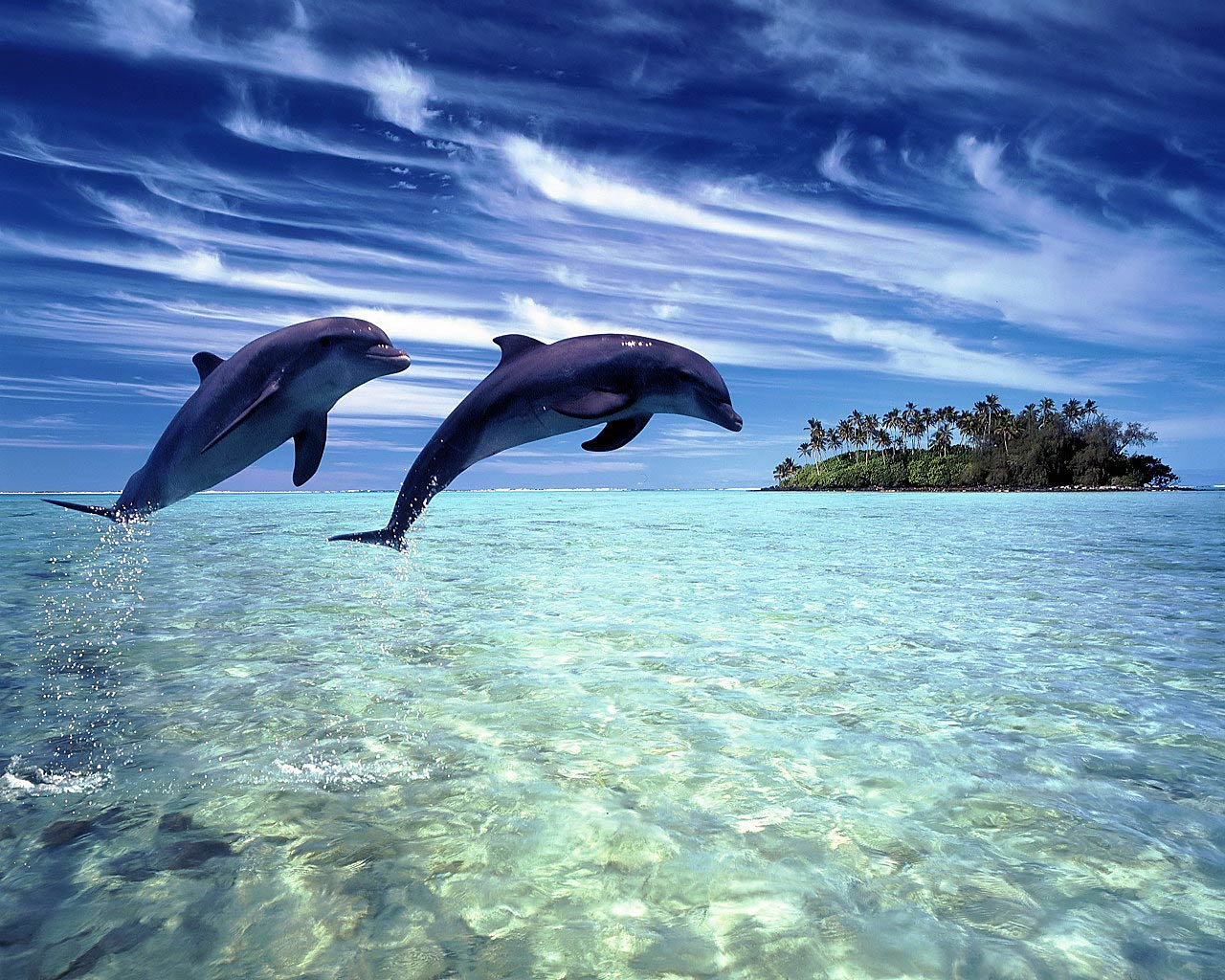 free Dolphin wallpaper wallpapers download 1280x1024