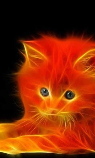 Neon Cat Wallpaper Wallpapersafari